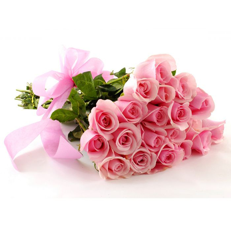 imported pink Roses 2200